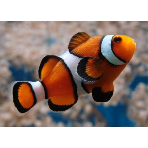 Pescaria Impossível (Instant Fish)