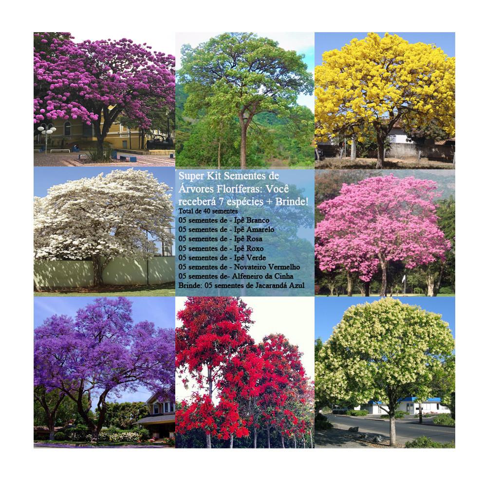 Kit Sementes De Ipês e Arvores Nativas e Exóticas - Total 8 Espécies