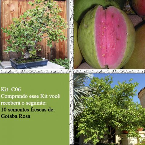 Goiaba Rosa Legítima - 10 Sementes Frescas