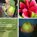 oiaba Tailandesa Gigante Vermelha Legítima - 10 Sementes Frescas