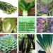 Kit Sementes De Hortaliças Orientais - Verduras Legumes e Ervas