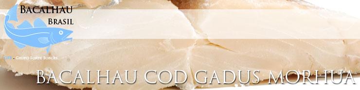 Cod Gadus Morhua