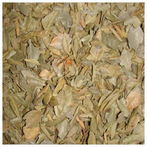 Boldo Folhas Importado - à Granel - Preço/Kg