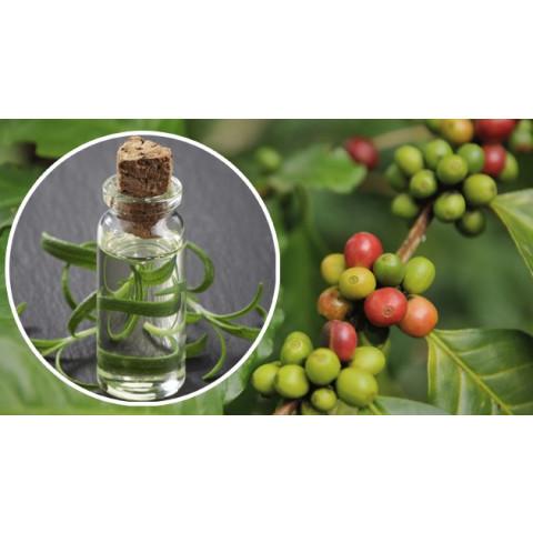 Óleo de café verde – 100 ML