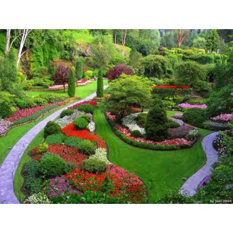 Adubo biológico com hormônio natural para jardins