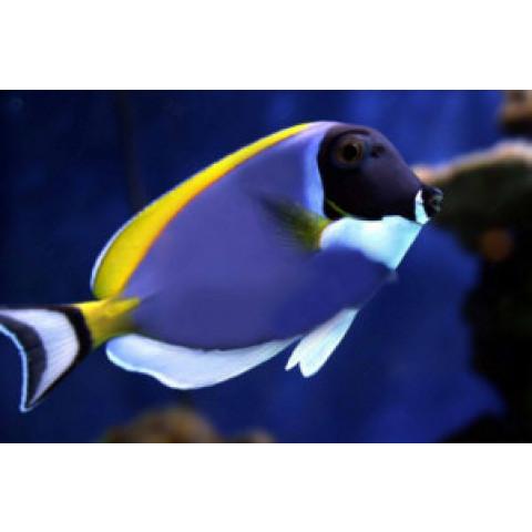 Higienizador de aquários ( o fim da morte de peixes)