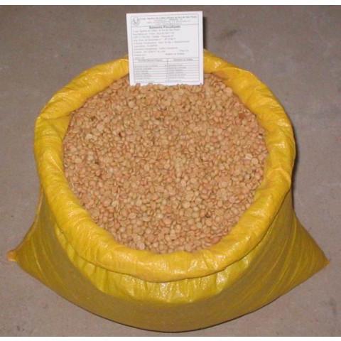 Sementes de café Clonado Resistente a Geadas (1 Quilo)
