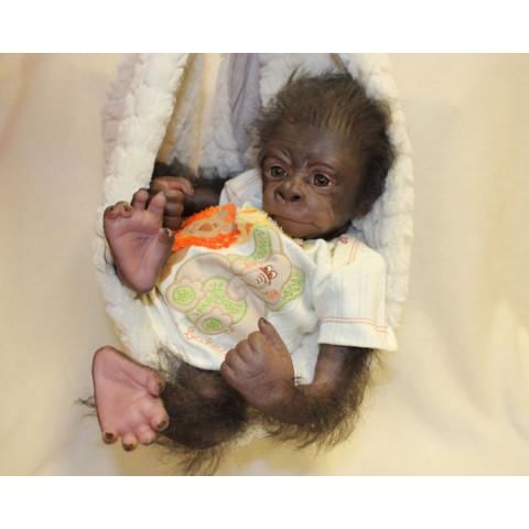 Kiwi - Enraizado e com olhos inseridos ( gorila acordado) ULTIMO KIT