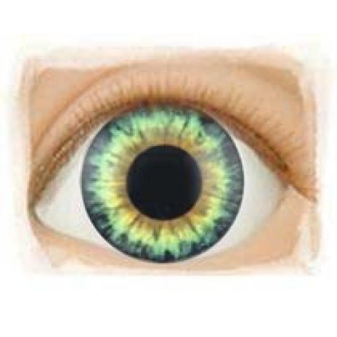 Olhos Aqua Hazel -14mm