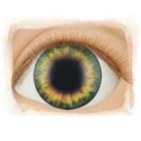 Olhos Sunrise Green ( vários tamanhos)