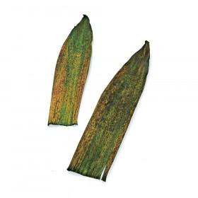 Folha de Bamboo - Verde