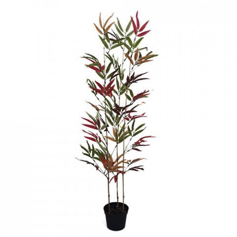 Bambu Áurea - Outonado (90 cm)
