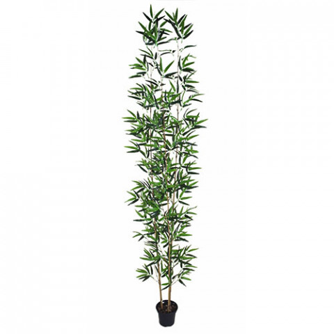 Bambu Áurea - Verde (1,8 m)