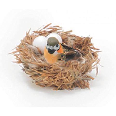 Pássaro no ninho com pena pequeno