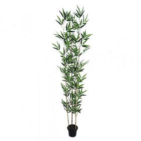 Bambu Áurea - Verde (1,5 m)