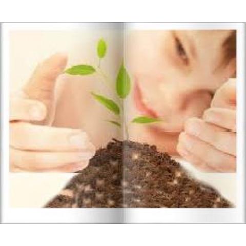 Você já Plantou uma Árvore? Plante com a Copaíba da Amazônia Kit Sementes de Copaibeira
