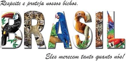 TRANSFER BRASIL BICHOS (196)