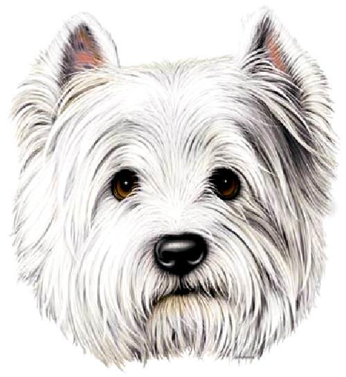 TRANSFER DOG TERRIER (147)