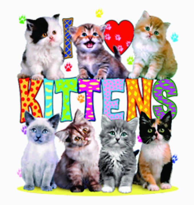 TRANSFER I LOVE KITTENS (203)
