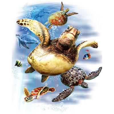 TRANSFER SEA TURTLES (536)