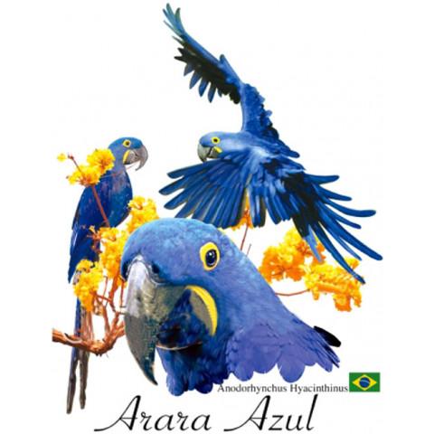 TRANSFER ARARA AZUL (954)
