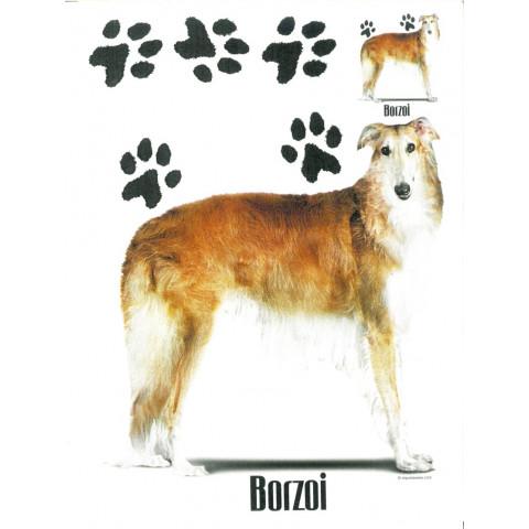 TRANSFER CACHORRO BORZOI (888)