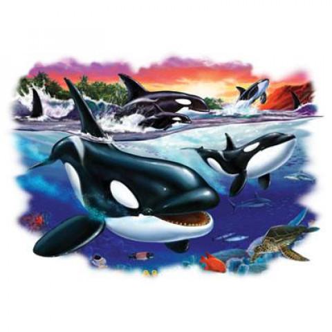 TRANSFER ORCAS (1057)