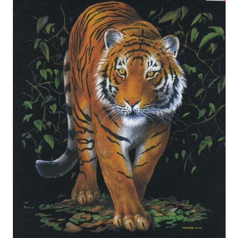 TRANSFER TIGRE 4 (905)