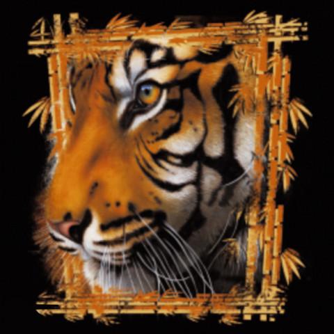 TRANSFER TIGRE (582)