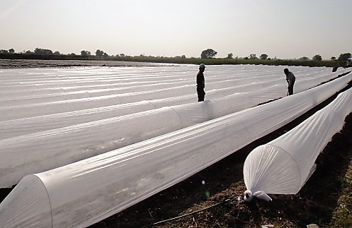 Plastico para Estufa tipo Tunel Cristal NORTENE 2,2X500 100 micras