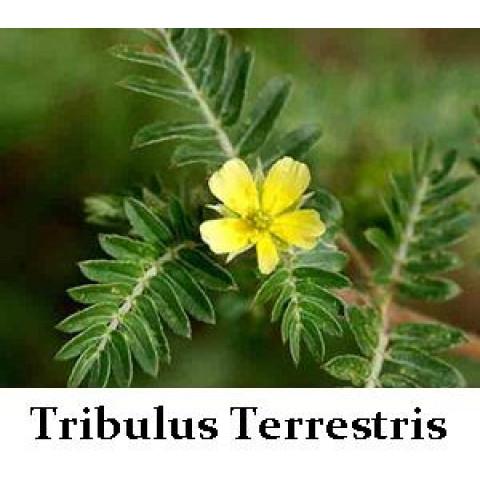 Ashwagandha + Tribulus + Saw Palmetto (60 doses)